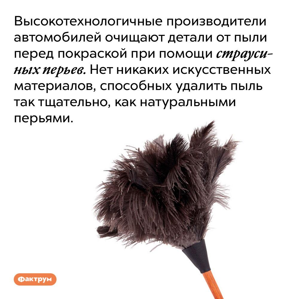 Высокотехнологичные производители автомобилей очищают детали от пыли при помощи страусиных перьев. Нет никаких искусственных материалов, способных удалить пыль так тщательно, как натуральными перьями.