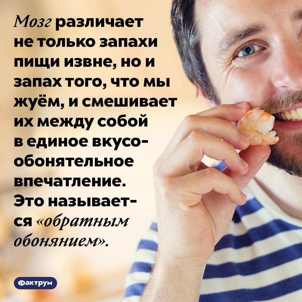 Мозг формирует вкус наоснове запахов извне иизнутри. Мозг различает не только запахи пищи извне, но и запах того, что мы жуём, и смешивает их между собой в единое вкусо-обонятельное впечатление. Это называется «обратным обонянием».