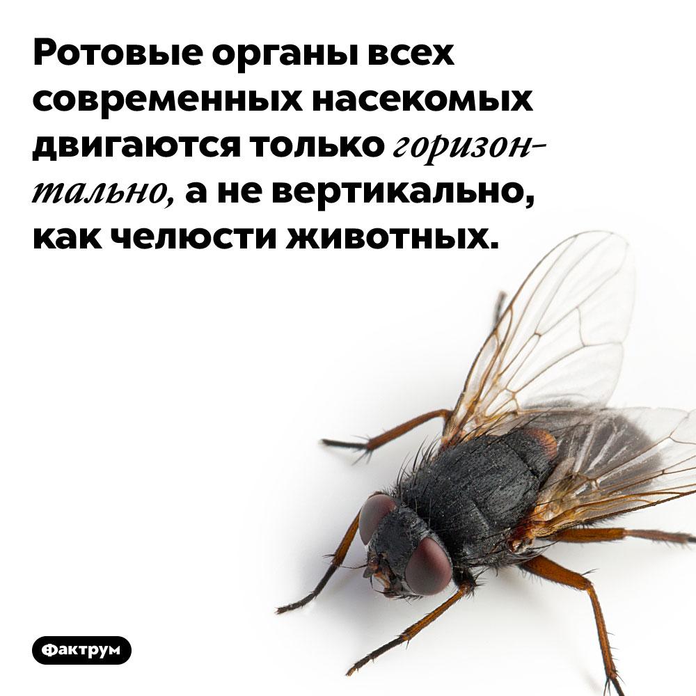 Ротовые органы всех современных насекомых двигаются только горизонтально. А не вертикально, как челюсти животных.