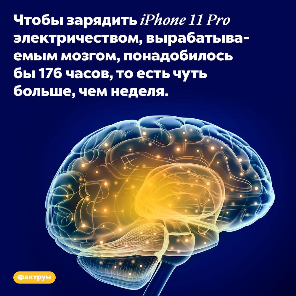 Мозг вырабатывает достаточно электричества, чтобы занеделю зарядить айфон. Чтобы зарядить iPhone 11 Pro электричеством, вырабатываемым мозгом, понадобилось бы 176 часов, то есть чуть больше, чем неделя.