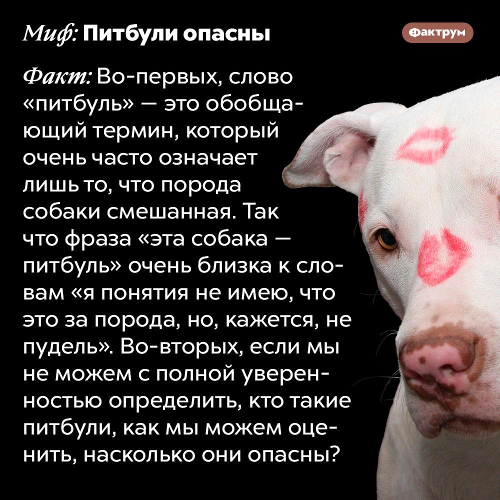 Опасность питбулей. Во-первых, слово «питбуль» — это обобщающий термин, который очень часто означает лишь то, что порода собаки смешанная. Так что фраза «эта собака — питбуль» очень близка к словам «я понятия не имею, что это за порода, но, кажется, не пудель». Во-вторых, если мы не можем с полной уверенностью определить, кто такие питбули, как мы можем оценить, насколько они опасны?
