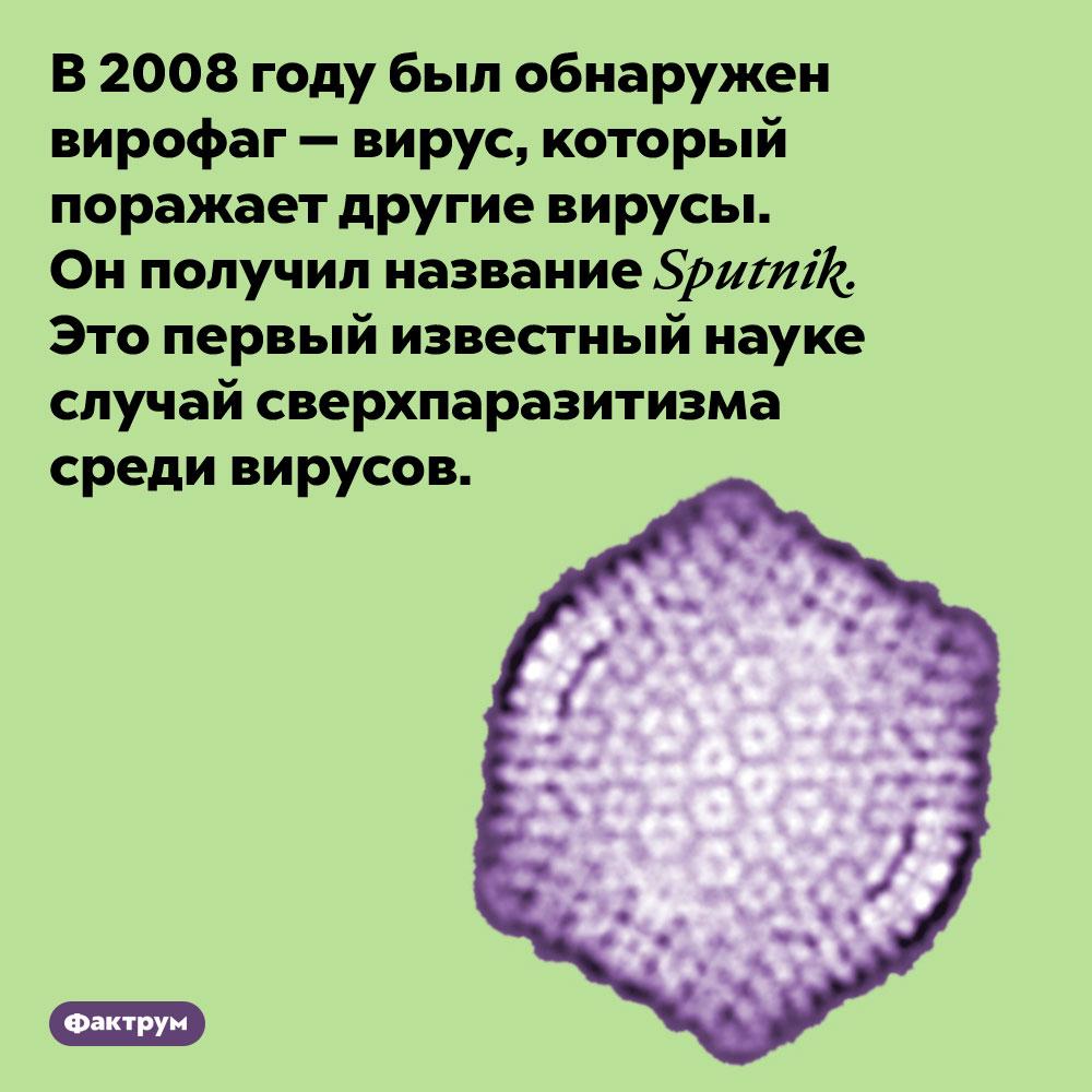 Sputnik — это вирус, заражающий вирусы. В 2008 году был обнаружен вирофаг — вирус, который поражает другие вирусы. Он получил название Sputnik. Это первый известный науке случай сверхпаразитизма среди вирусов.