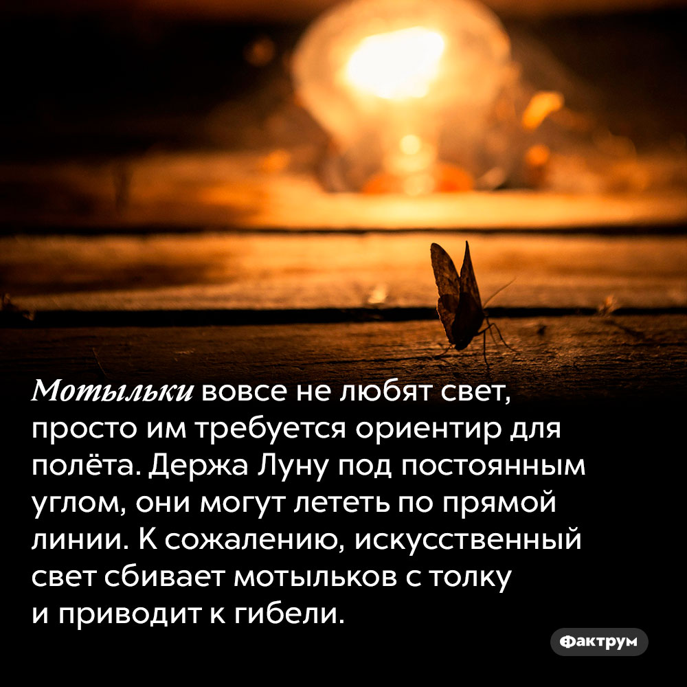 Мотыльки нелюбят свет. Мотыльки вовсе не любят свет, просто им требуется ориентир для полёта. Держа Луну под постоянным углом, они могут лететь по прямой линии. К сожалению, искусственный свет сбивает мотыльков с толку и приводит к гибели.