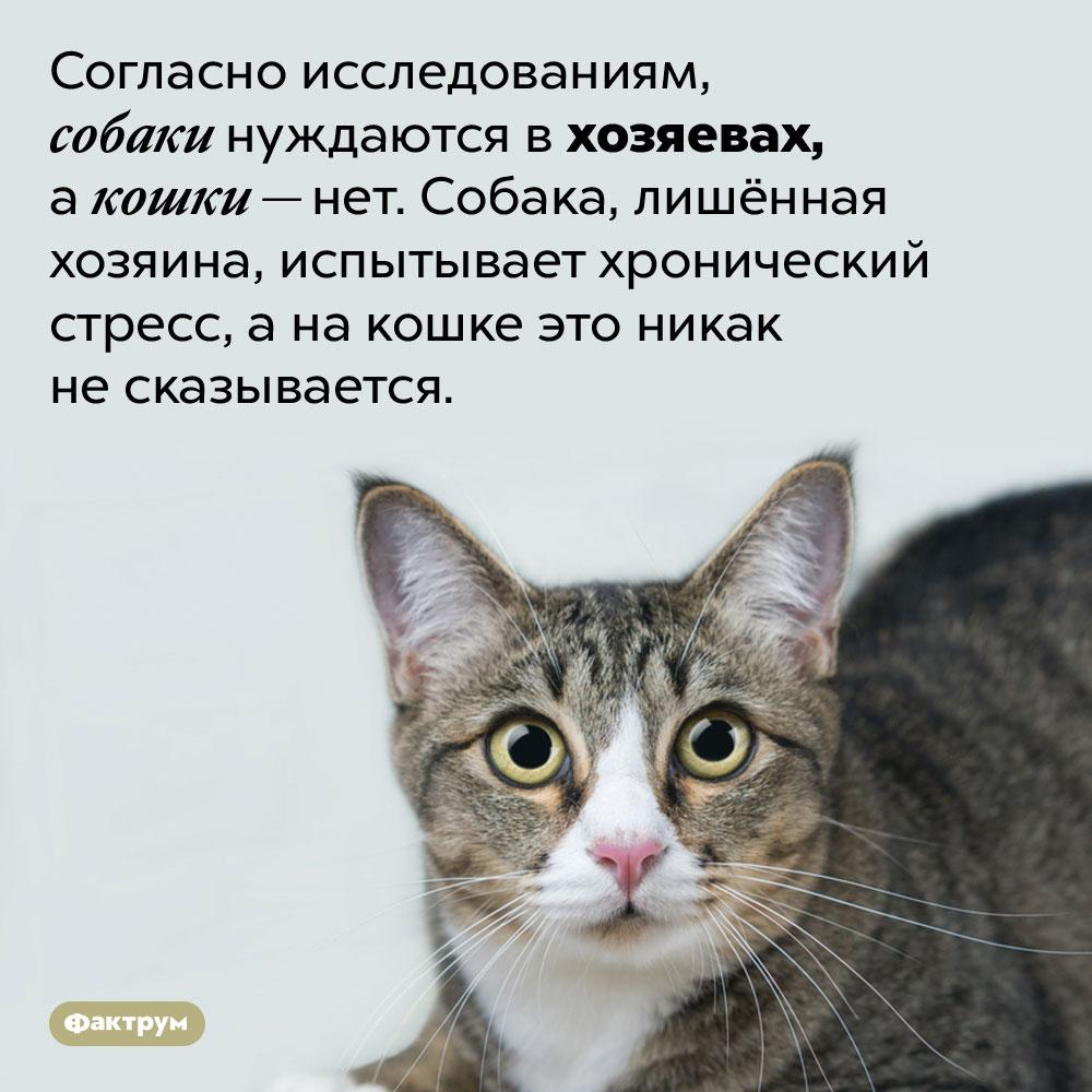 Кошка ненуждается вхозяине. Согласно исследованиям, собаки нуждаются в хозяевах, а кошки — нет. Собака, лишённая хозяина, испытывает хронический стресс, а на кошке это никак не сказывается.