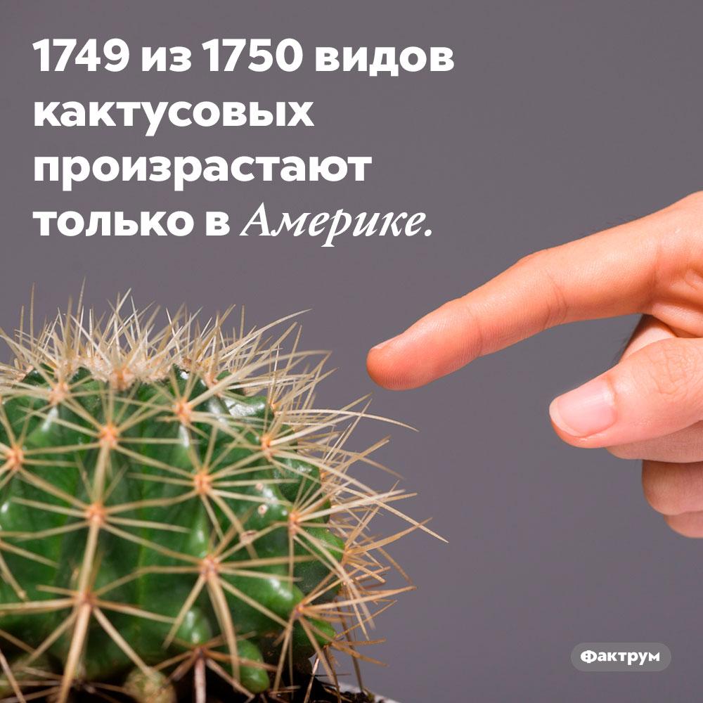 1749 из1750видов кактусовых произрастают только вАмерике.
