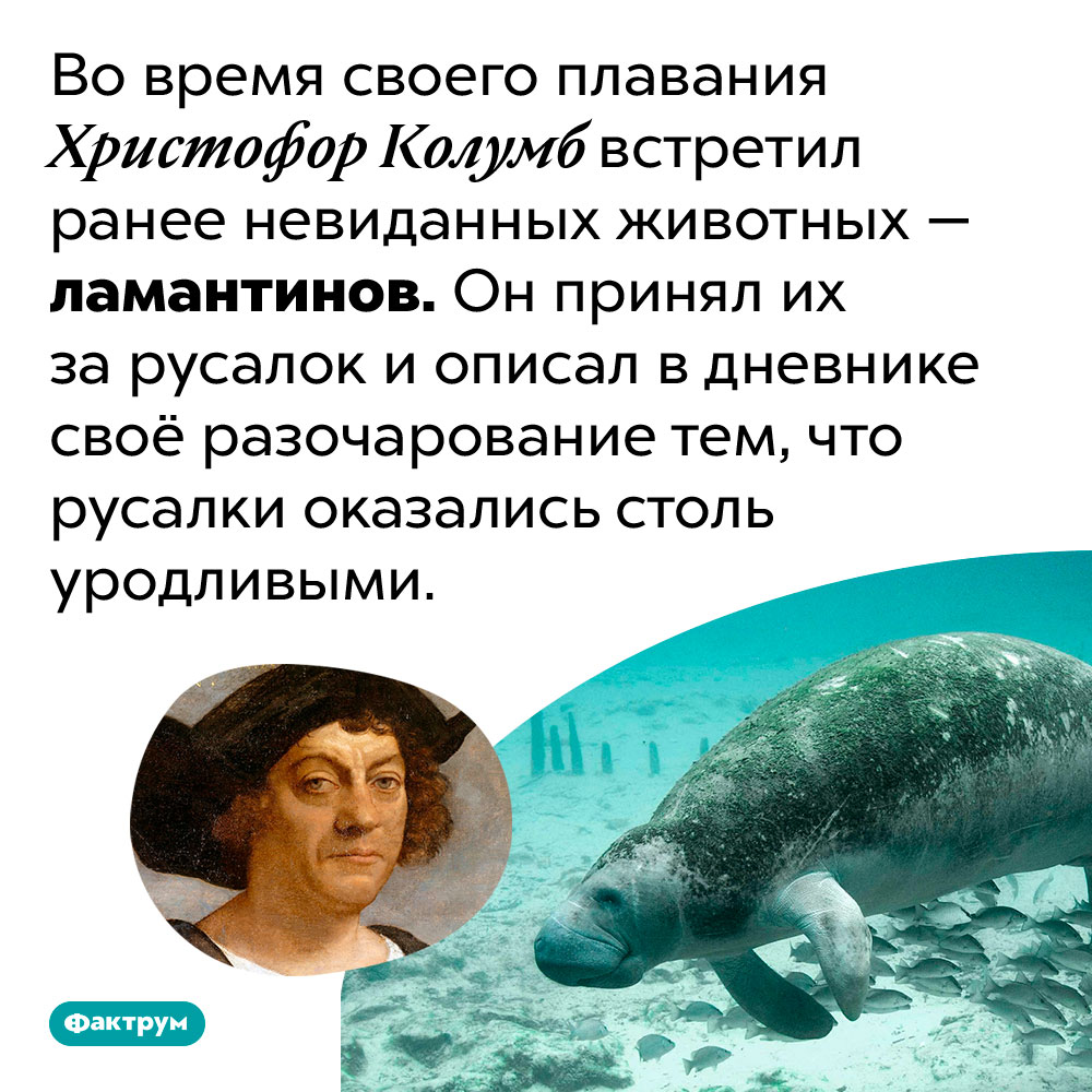 Колумб принял ламантинов зарусалок. Во время своего плавания Христофор Колумб встретил ранее невиданных животных — ламантинов. Он принял их за русалок и описал в дневнике своё разочарование тем, что русалки оказались столь уродливыми.