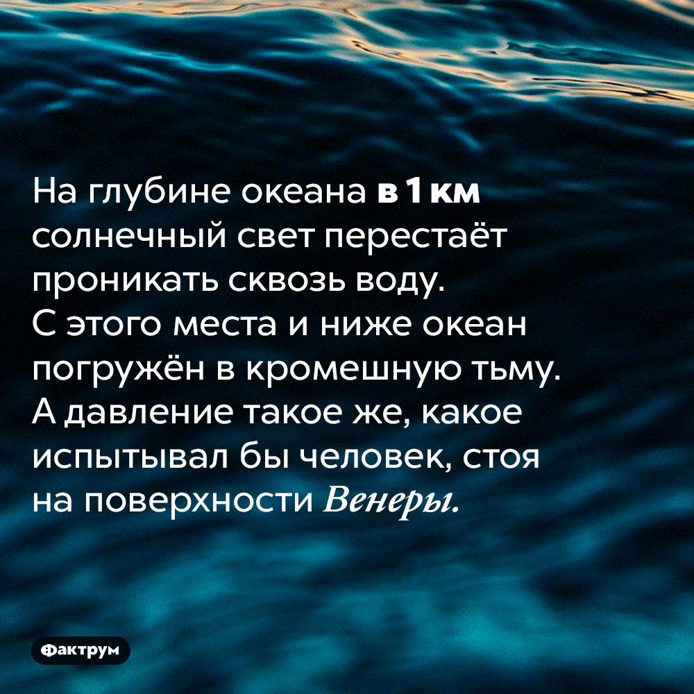 Солнечный свет проникает вокеан только доглубины в1000м. На глубине океана в 1 км солнечный свет перестаёт проникать сквозь воду. С этого места и ниже океан погружён в кромешную тьму. А давление такое же, какое испытывал бы человек, стоя на поверхности Венеры.