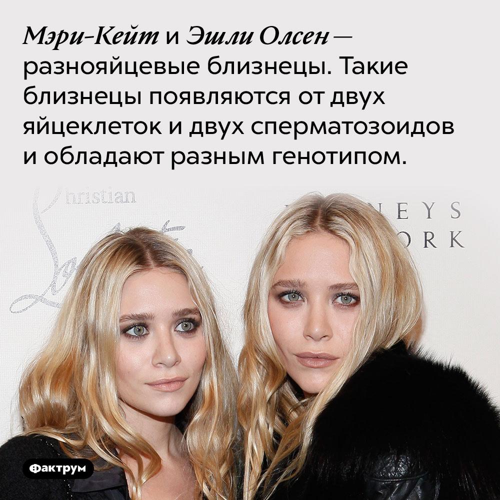 Мэри-Кейт иЭшли Олсен являются разнояйцевыми близнецами. Мэри-Кейт и Эшли Олсен — разнояйцевые близнецы. Такие близнецы появляются от двух яйцеклеток и двух сперматозоидов и обладают разным генотипом.
