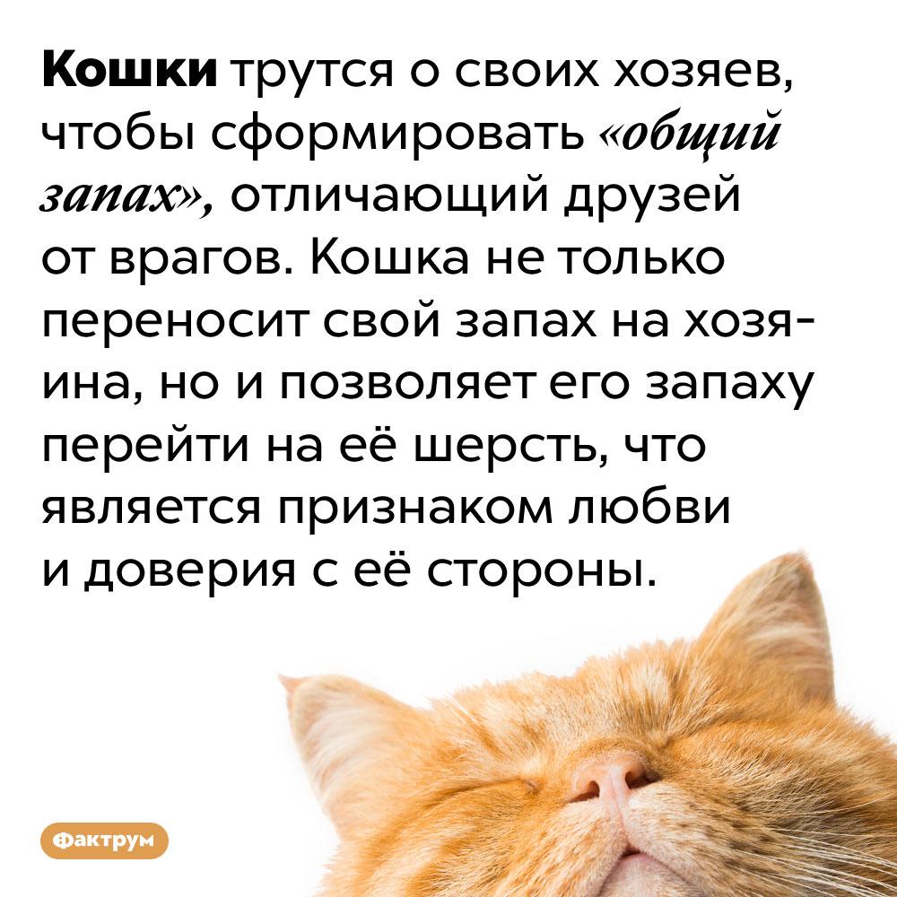 Кошки трутся охозяина чтобы сформировать «общий запах». Кошки трутся о своих хозяев, чтобы сформировать «общий запах», отличающий друзей от врагов. Кошка не только переносит свой запах на хозяина, но и позволяет его запаху перейти на её шерсть, что является признаком любви и доверия с её стороны.
