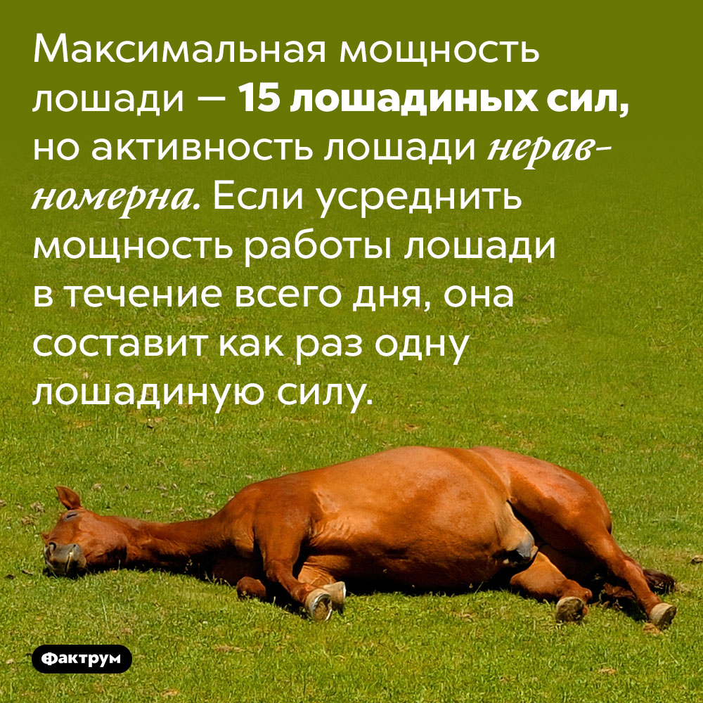 Мощность лошади, всреднем, составляет одну лошадиную силу. Максимальная мощность лошади — 15 лошадиных сил, но активность лошади неравномерна. Если усреднить мощность работы лошади в течение всего дня, она составит как раз одну лошадиную силу.