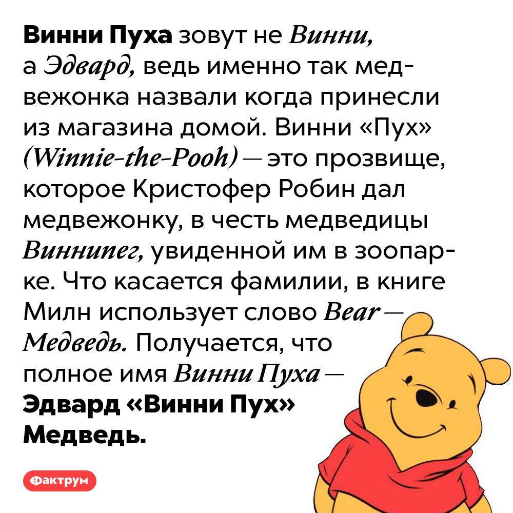 Винни Пуха зовут Эдвард Медведь. Винни Пуха зовут не Винни, а Эдвард, ведь именно так медвежонка назвали когда принесли из магазина домой. Винни «Пух» (Winnie-the-Pooh) — это прозвище, которое Кристофер Робин дал медвежонку, в честь медведицы Виннипег, увиденной им в зоопарке.  Что касается фамилии, в книге Милн использует слово Bear — Медведь. Получается, что полное имя Винни Пуха — Эдвард «Винни Пух» Медведь.