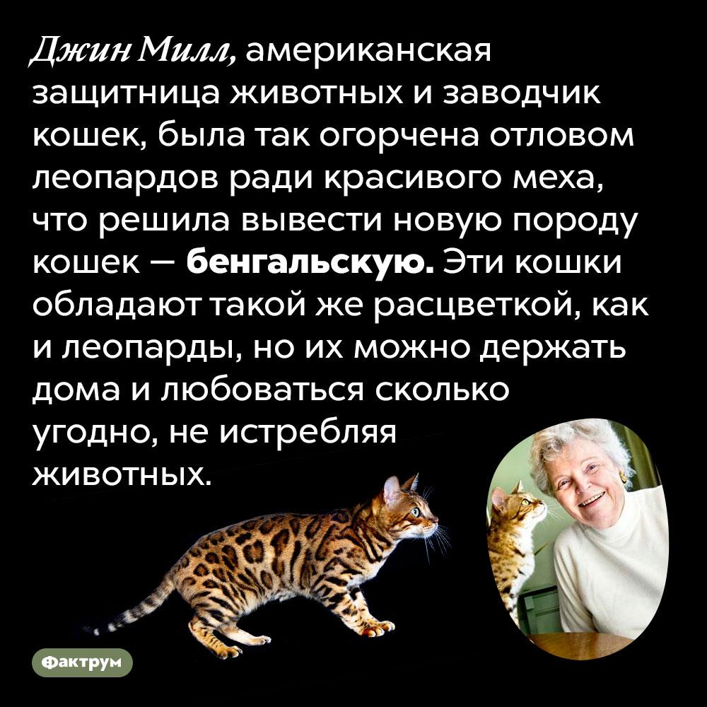 Джин Милл вывела бенгальскую породу кошек из-за жалости клеопардам. Джин Милл, американская защитница животных и заводчик кошек, была так огорчена отловом леопардов ради красивого меха, что решила вывести новую породу кошек — бенгальскую. Эти кошки обладают такой же расцветкой, как и леопарды, но их можно держать дома и любоваться сколько угодно, не истребляя животных.