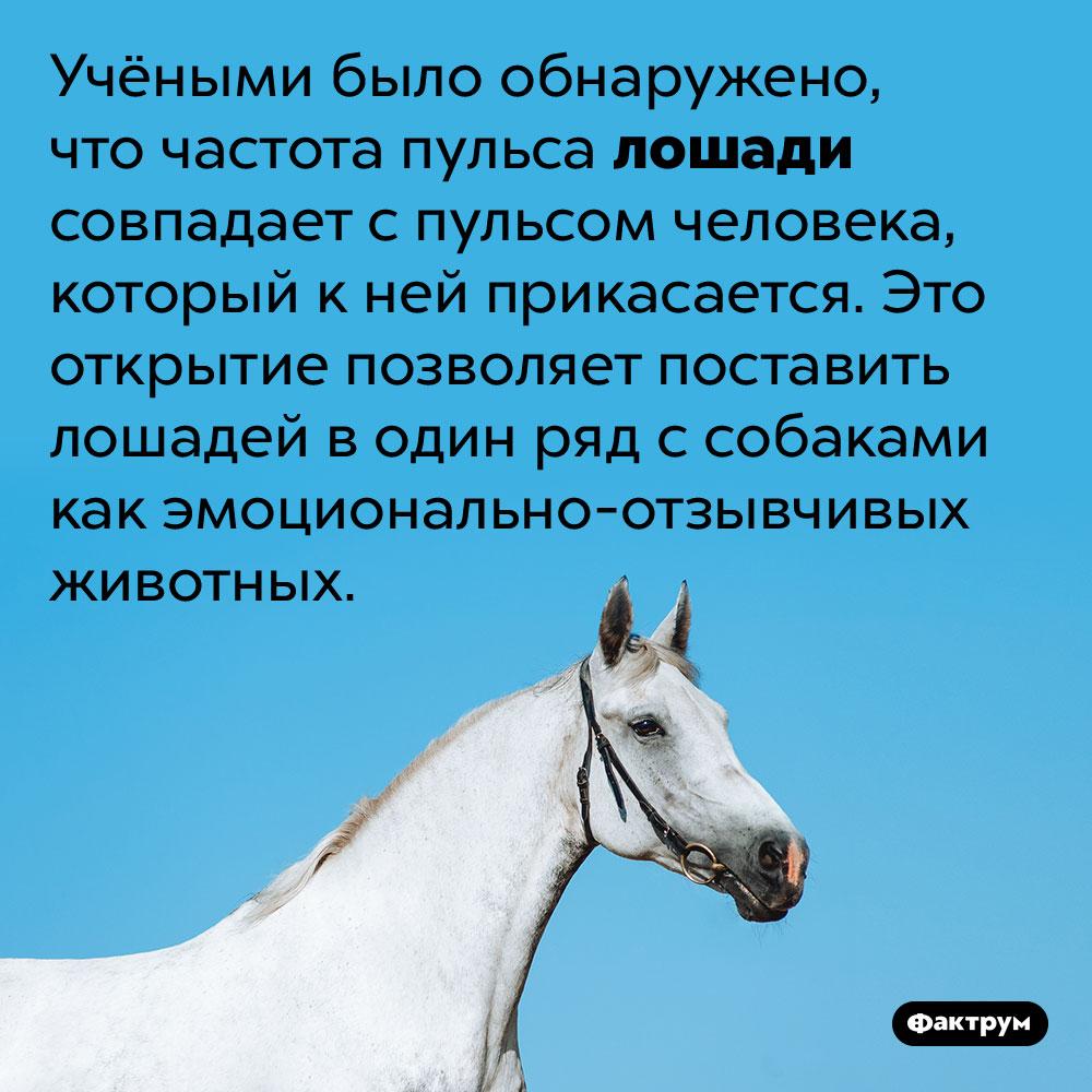 Лошади эмоционально-отзывчивы поотношению клюдям. Учёный обнаружил, что частота пульса лошади совпадает с пульсом человека, который к ней прикасается. Это открытие позволяет поставить лошадей в один ряд с собаками как эмоционально-отзывчивых животных.