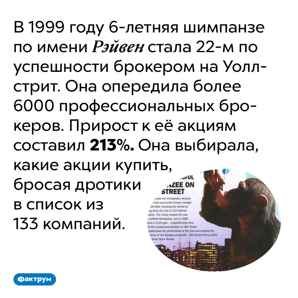 Шимпанзе обыграла набирже более 6000профессиональных брокеров. В 1999 году 6-летняя шимпанзе по имени Рэйвен стала 22-м по успешности брокером на Уолл-стрит. Она опередила более 6000 профессиональных брокеров. Прирост к её акциям составил 213%. Она выбирала, какие акции купить, бросая дротики в список из 133 компаний.