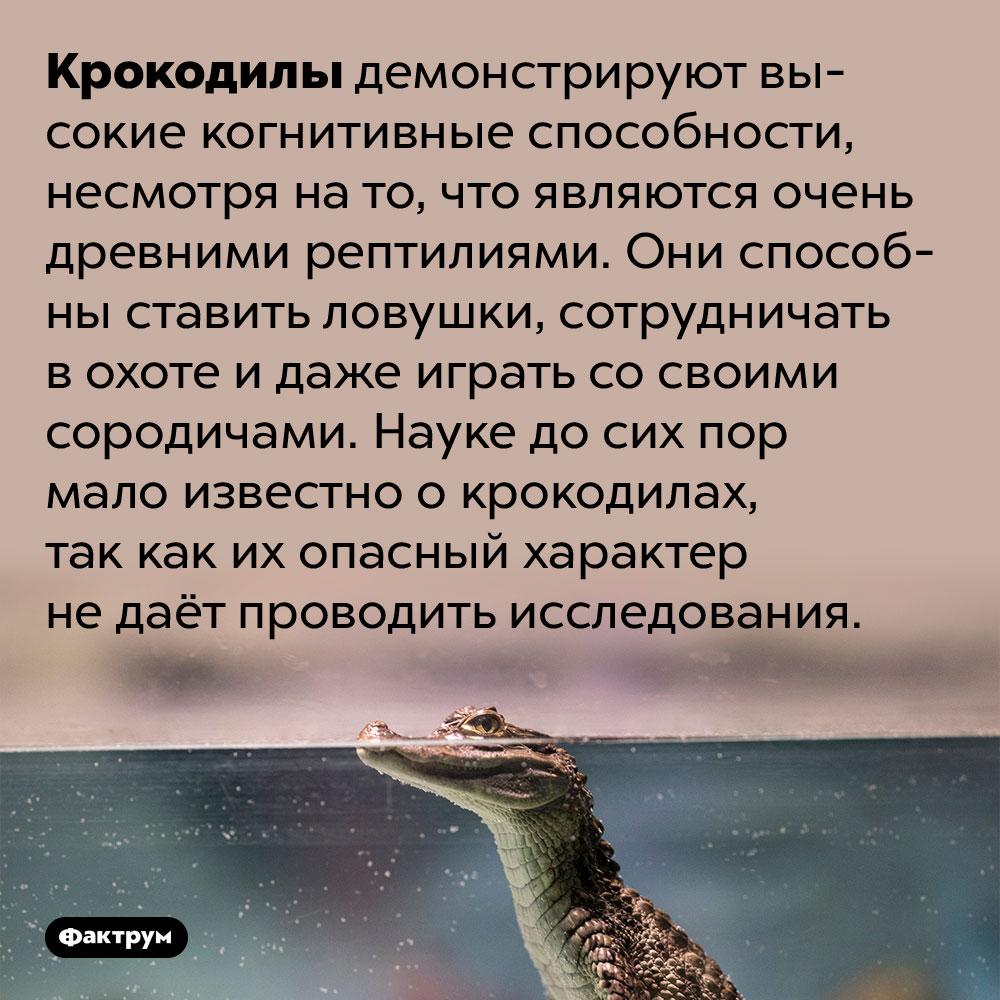 Крокодилы умны. Крокодилы демонстрируют высокие когнитивные способности, несмотря на то, что являются очень древними рептилиями. Они способны ставить ловушки, сотрудничать в охоте и даже играть со своими сородичами. Науке до сих пор мало известно о крокодилах, так как их опасный характер не даёт проводить исследования.