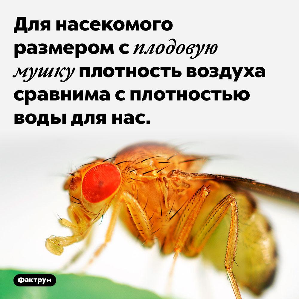 Для насекомого размером сплодовую мушку плотность воздуха сравнима с плотностью воды для нас.