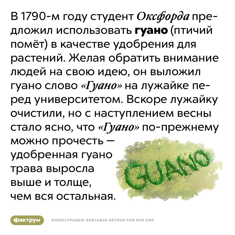 Студент Оксфорда продемонстрировал полезные свойства гуано, выложив им слово «гуано» науниверситетской лужайке. В 1790-м году студент Оксфорда предложил использовать гуано (птичий помёт) в качестве удобрения для растений. Желая обратить внимание людей на свою идею, он выложил гуано слово «Гуано» на лужайке перед университетом. Вскоре лужайку очистили, но с наступлением весны стало ясно, что «Гуано» по-прежнему можно прочесть — удобренная гуано трава выросла выше и толще, чем вся остальная.