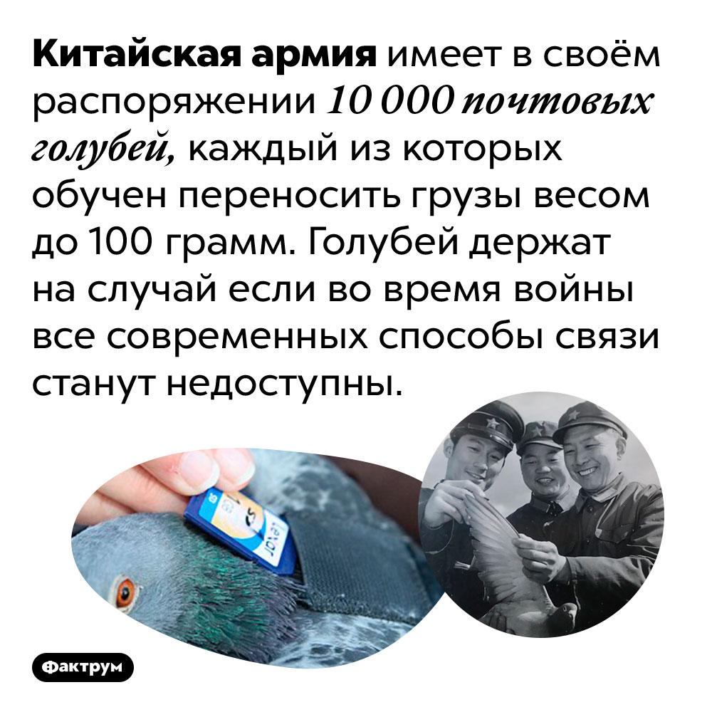 Вкитайской армии «служат» 10000 голубей. Китайская армия имеет в своём распоряжении 10 000 почтовых голубей, каждый из которых обучен переносить грузы весом до 100 грамм. Голубей держат на случай если во время войны все современных способы связи станут недоступны.
