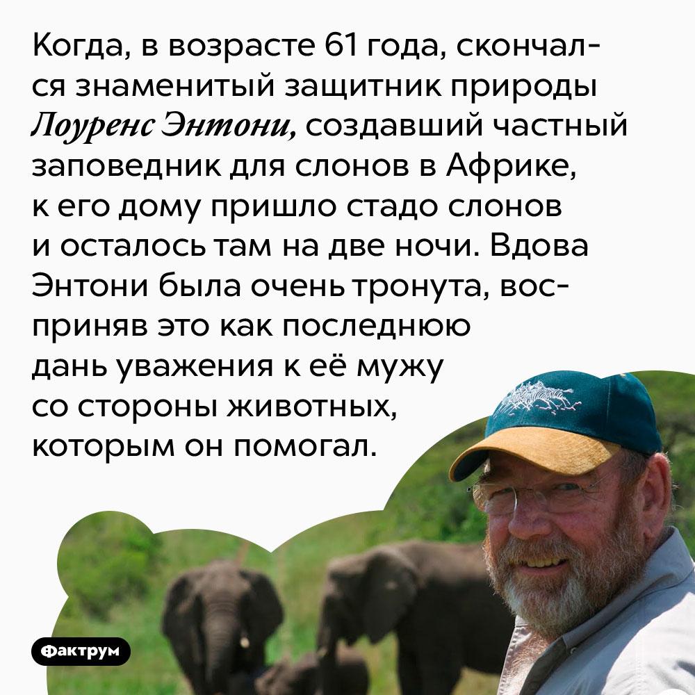 Слоны пришли проводить защитника природы впоследний путь. Когда, в возрасте 61 года, скончался знаменитый защитник природы Лоуренс Энтони, создавший частный заповедник для слонов в Африке, к его дому пришло стадо слонов и осталось там на две ночи. Вдова Энтони была очень тронута, восприняв это как последнюю дань уважения к её мужу со стороны животных, которым он помогал.