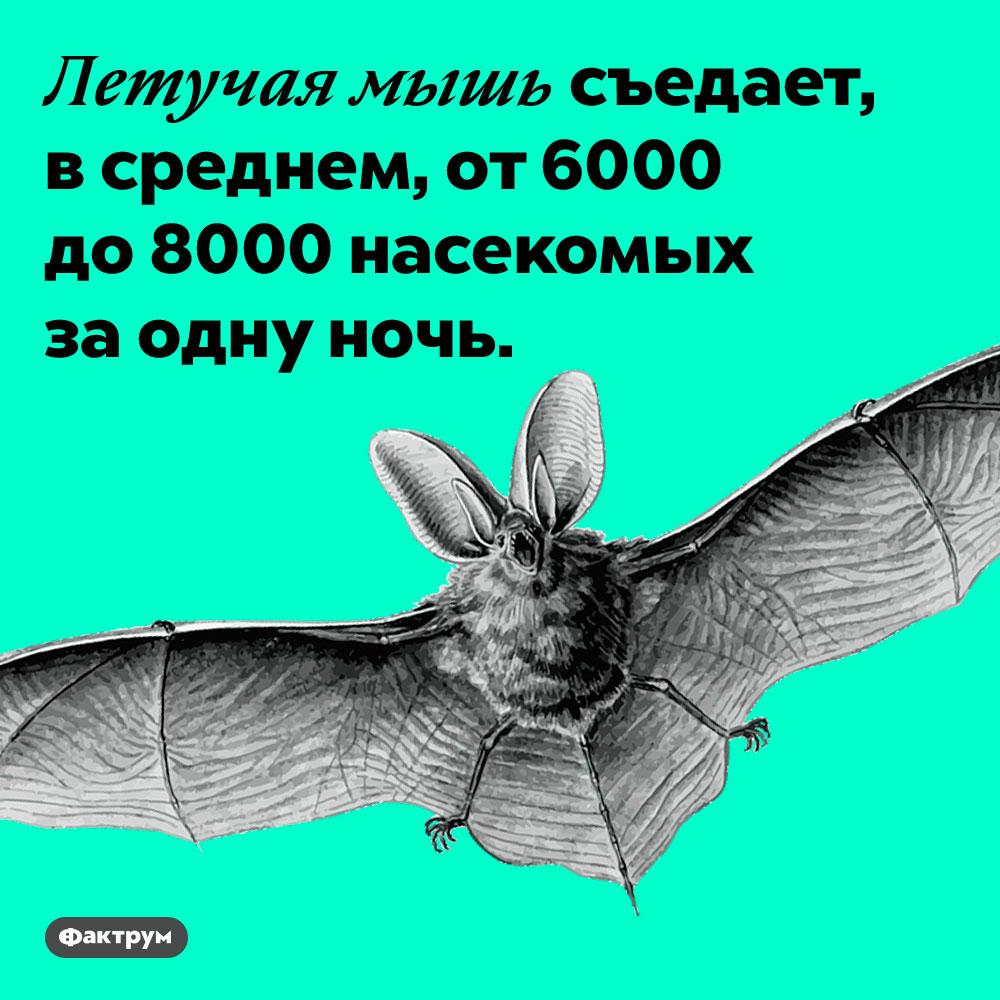 Летучие мыши съедают тысячи насекомых всутки. Летучая мышь съедает, в среднем, от 6000 до 8000 насекомых за одну ночь.