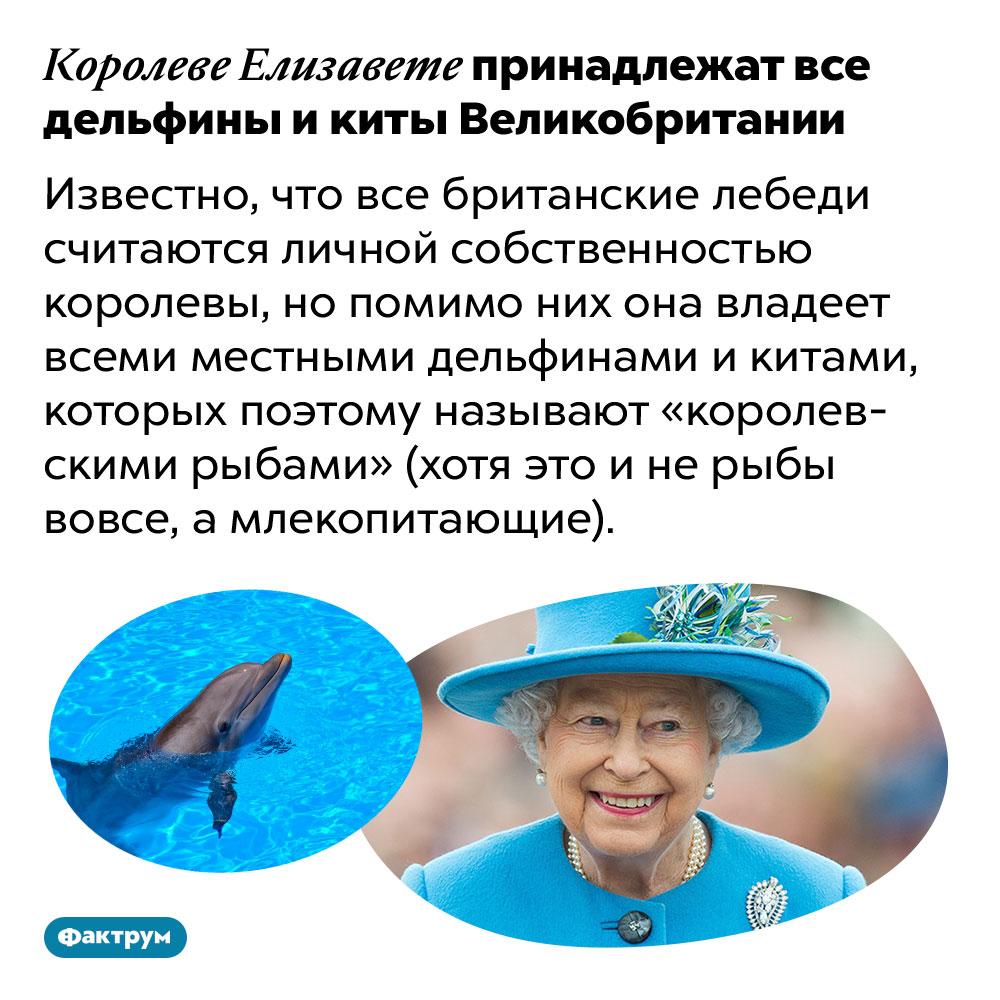 Королеве Елизавете принадлежат все дельфины икиты Великобритании. Известно, что все британские лебеди считаются личной собственностью королевы, но помимо них она владеет всеми местными дельфинами и китами, которых поэтому называют «королевскими рыбами» (хотя это и не рыбы вовсе, а млекопитающие).