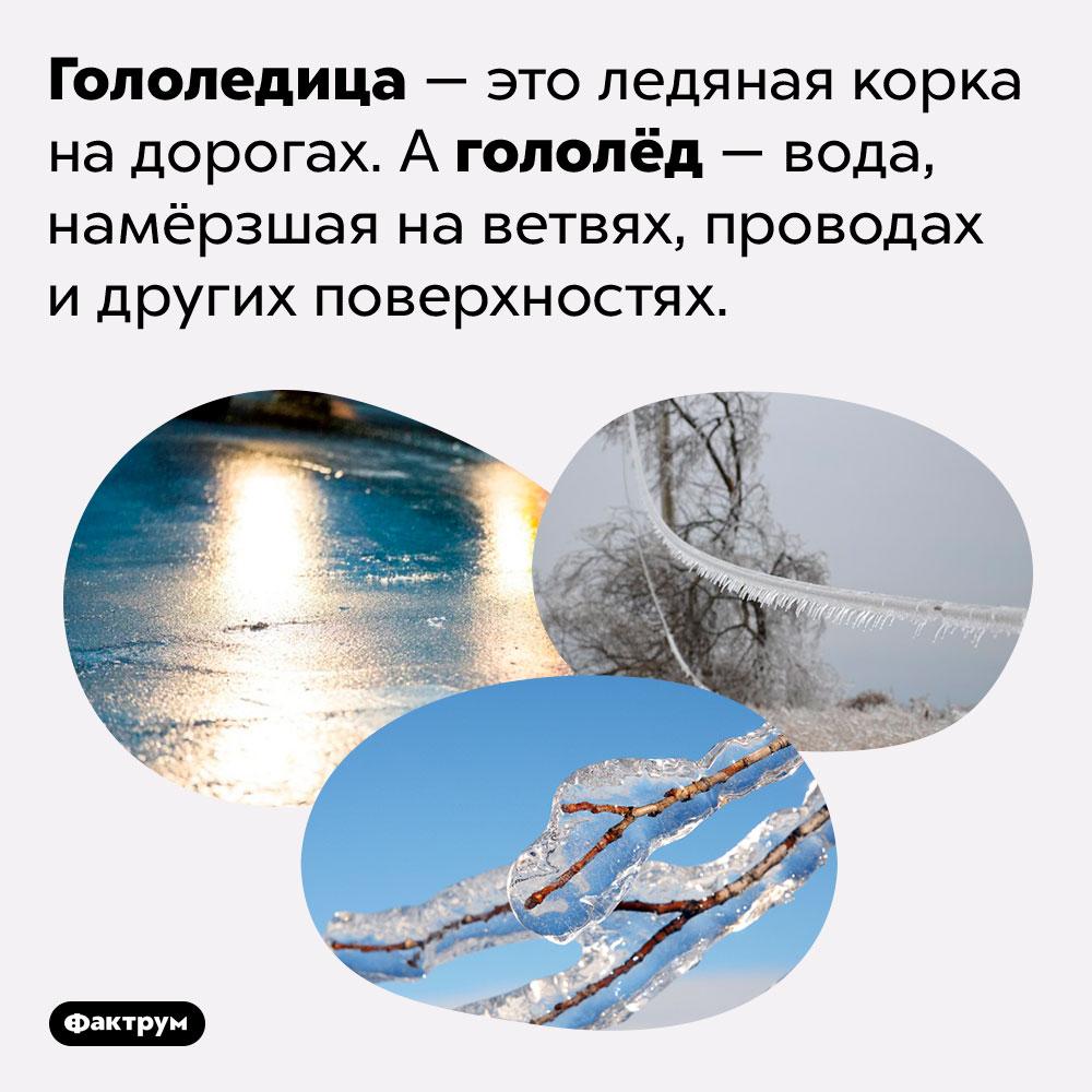 «Гололёд» и«гололедица» — это разные понятия. Гололедица — это ледяная корка на дорогах. А гололёд — вода, намёрзшая на ветвях, проводах и других поверхностях.