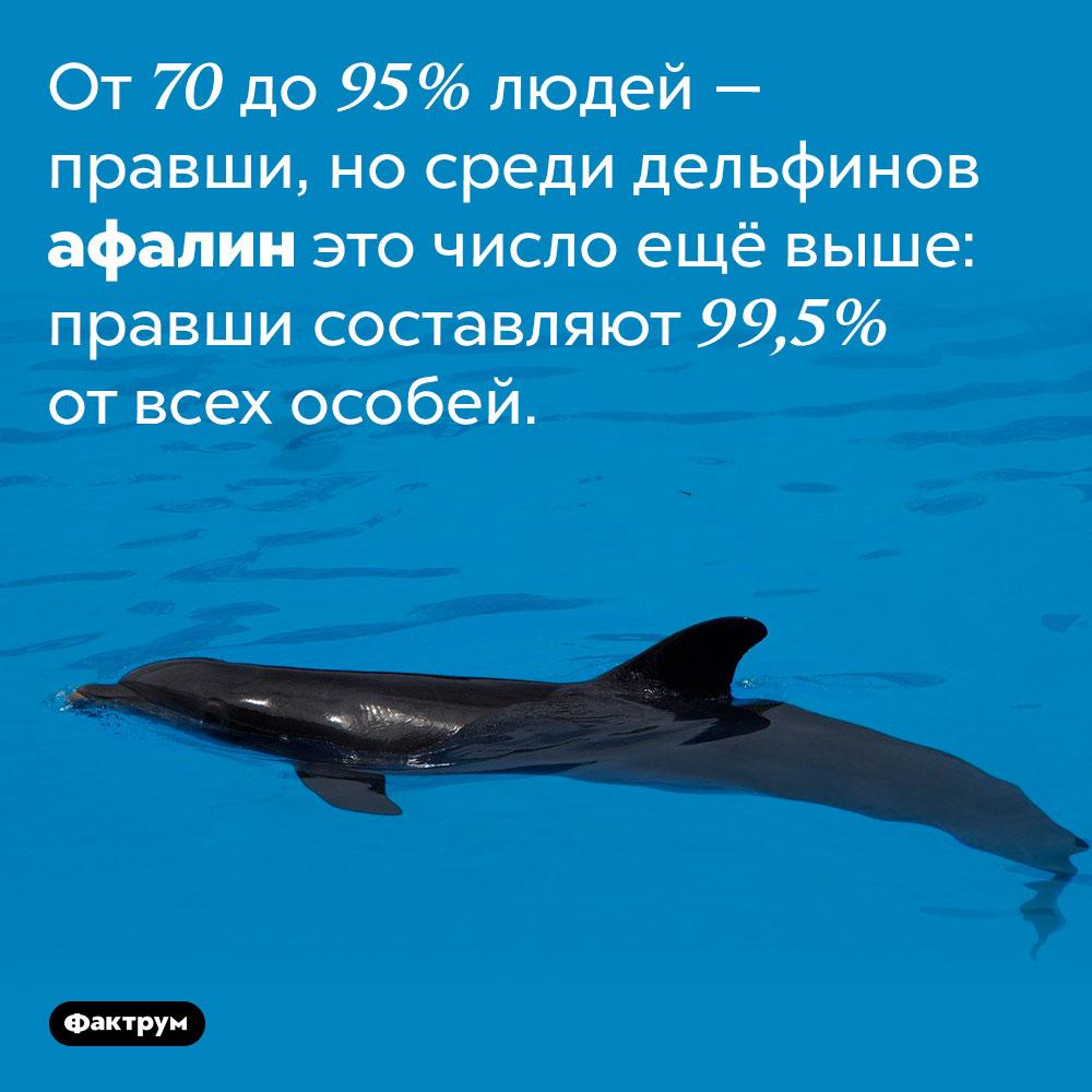 Среди афалин больше правшей, чем среди людей. От 70 до 95% людей — правши, но среди дельфинов афалин это число ещё выше: правши составляют 99,5% от всех особей.