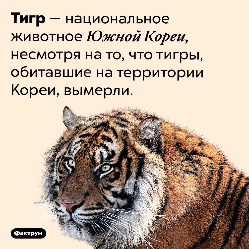 Тигры вымерли вЮжной Корее, ноостались национальным животным этой страны. Тигр — национальное животное Южной Кореи, несмотря на то, что тигры, обитавшие на территории Кореи, вымерли.
