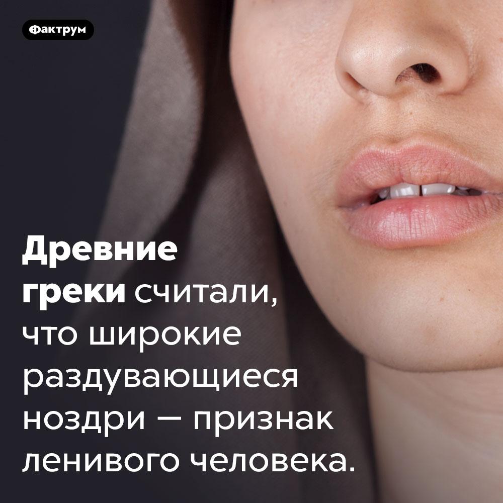 ВДревней Греции считалось, что люди сширокими ноздрями ленивые. Древние греки считали, что широкие раздувающиеся ноздри — признак ленивого человека.