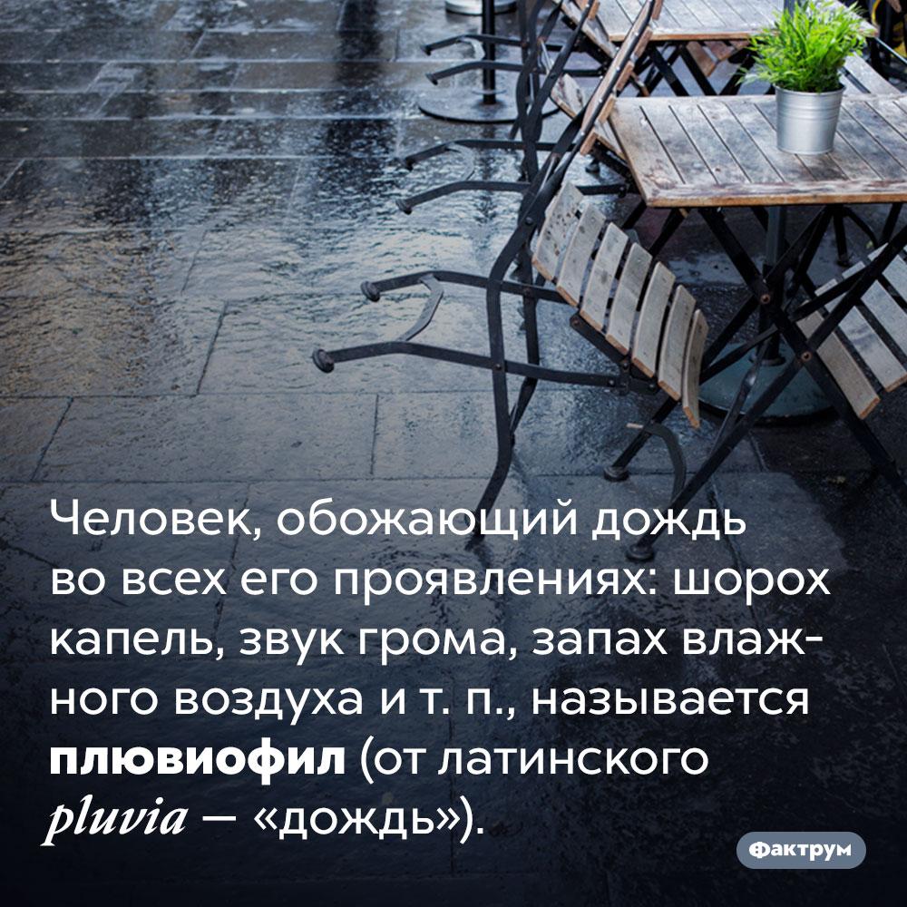 Человек, очень любящий дождь, называется «плювиофил». Человек, обожающий дождь во всех его проявлениях: шорох капель, звук грома, запах влажного воздуха и т. п., называется плювиофил (от латинского pluvia — «дождь»).