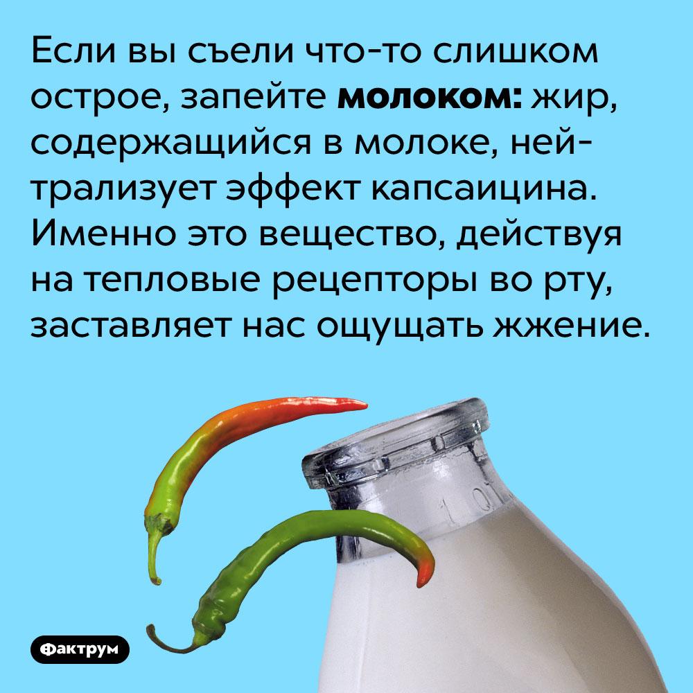 Если вы съели что-то слишком острое, запейте молоком. Жир, содержащийся в молоке, нейтрализует эффект капсаицина. Именно это вещество, действуя на тепловые рецепторы во рту, заставляет нас ощущать жжение.