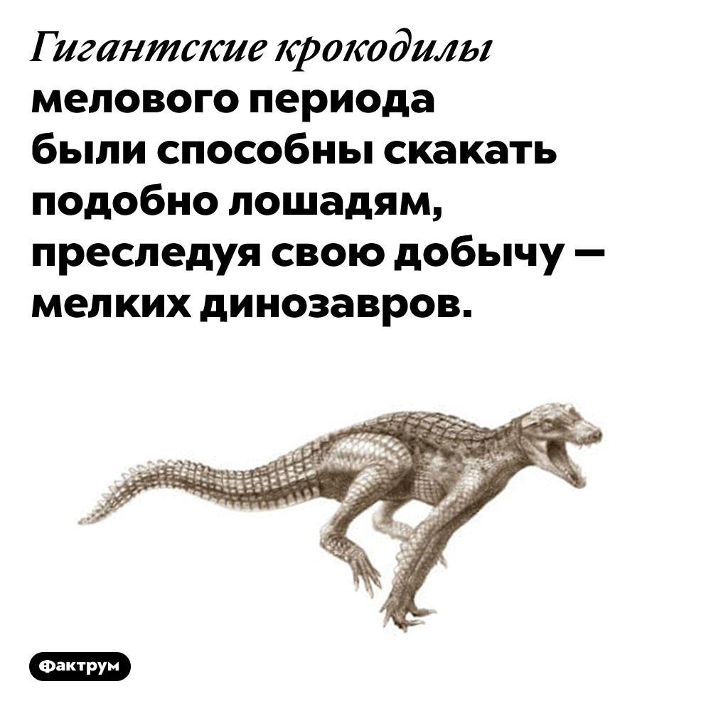 Доисторические крокодилы скакали, каклошади. Гигантские крокодилы мелового периода были способны скакать подобно лошадям, преследуя свою добычу — мелких динозавров.