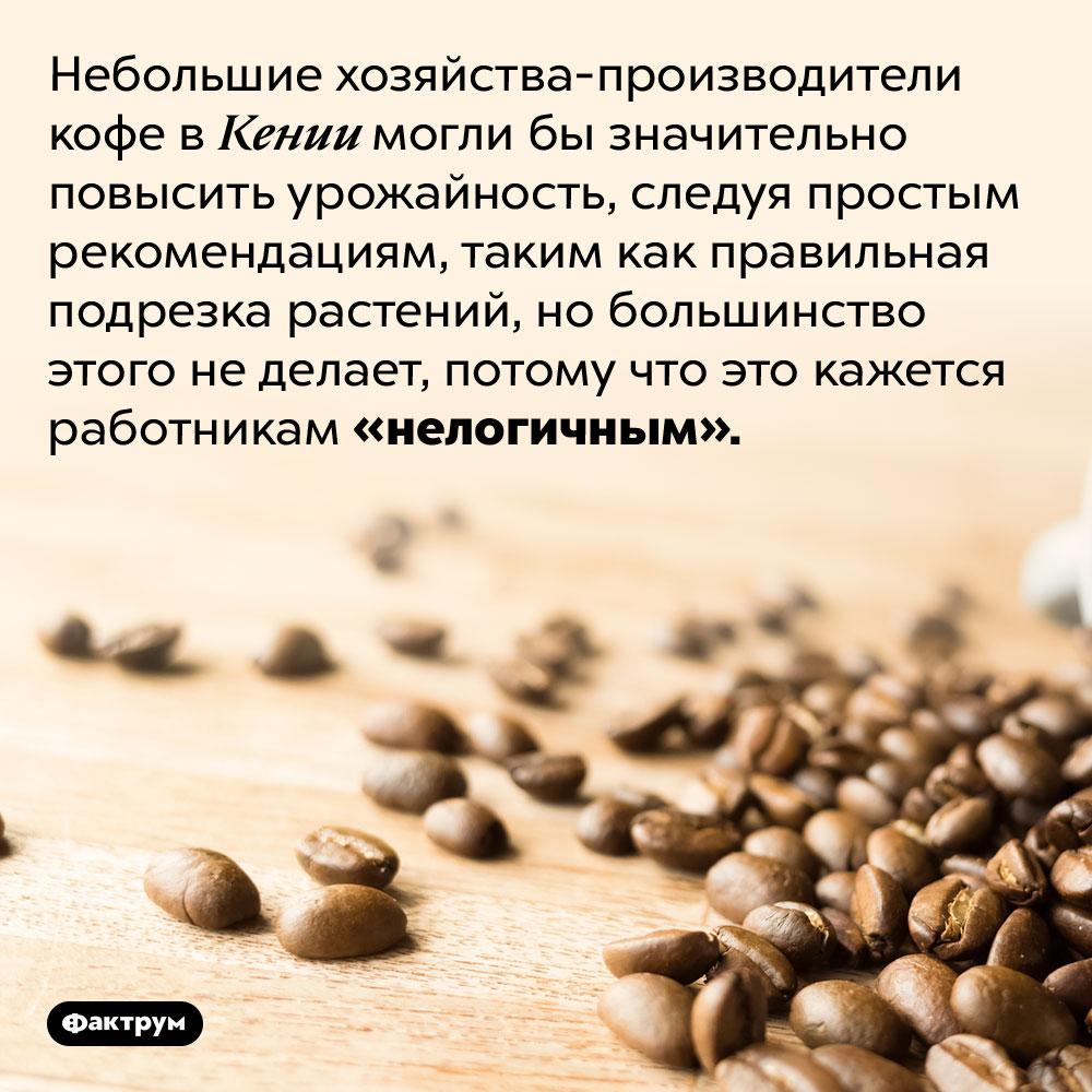 Кенийские производители кофе страдают отсвоей консервативности. Небольшие хозяйства-производители кофе в Кении могли бы значительно повысить урожайность, следуя простым рекомендациям, таким как правильная подрезка растений, но большинство этого не делает, потому что это кажется работникам «нелогичным».