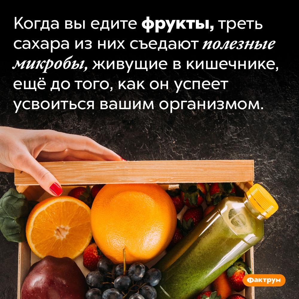 При употреблении фруктов треть сахара съедают кишечные бактерии. Когда вы едите фрукты, треть сахара из них съедают полезные микробы, живущие в кишечнике, ещё до того, как он успеет усвоиться вашим организмом.