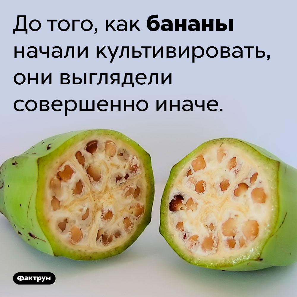 Раньше бананы выглядели по-другому. До того, как бананы начали культивировать, они выглядели совершенно иначе.