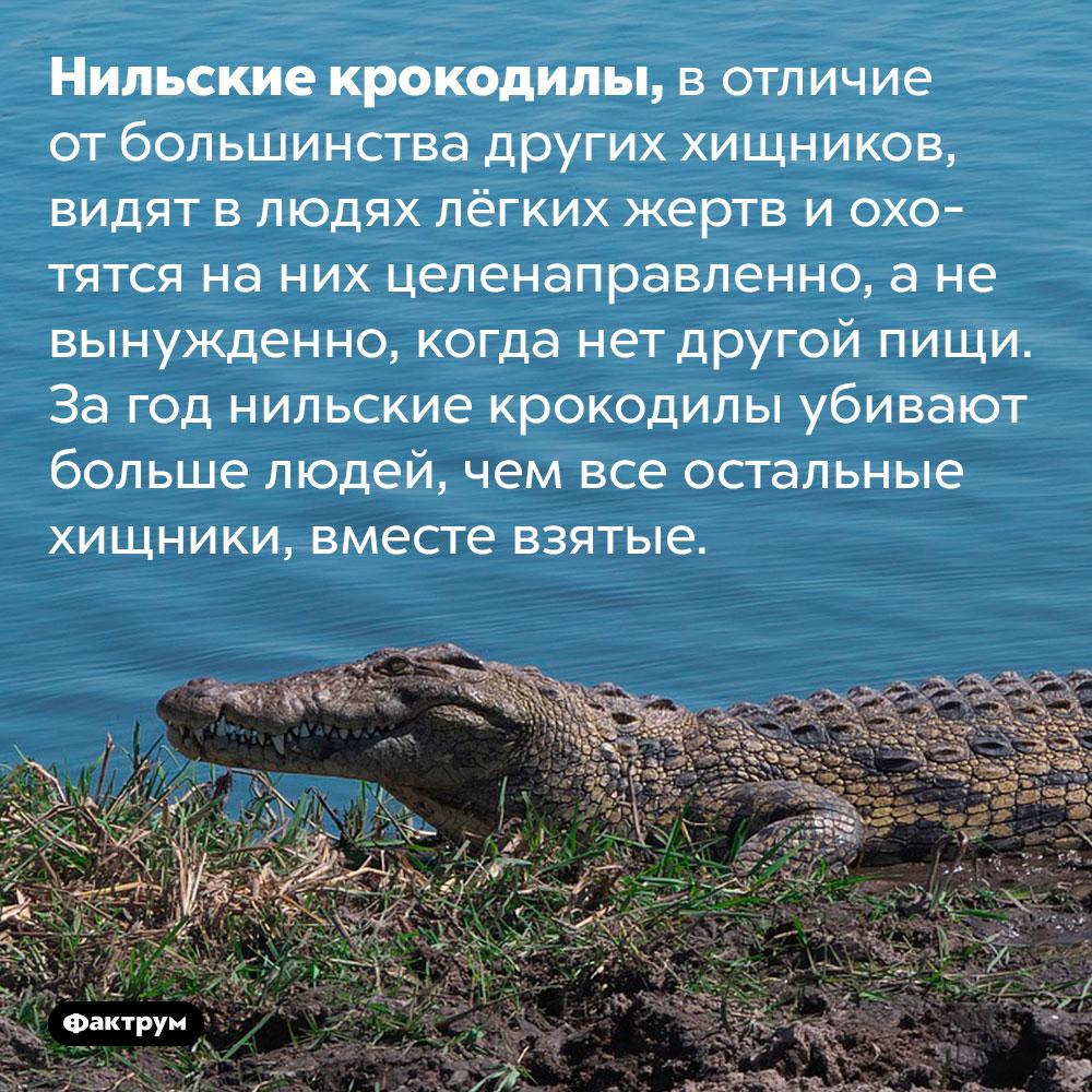 Нильские крокодилы любят охотиться налюдей. Нильские крокодилы, в отличие от большинства других хищников, видят в людях лёгких жертв и охотятся на них целенаправленно, а не вынужденно, когда нет другой пищи. За год нильские крокодилы убивают больше людей, чем все остальные хищники, вместе взятые.