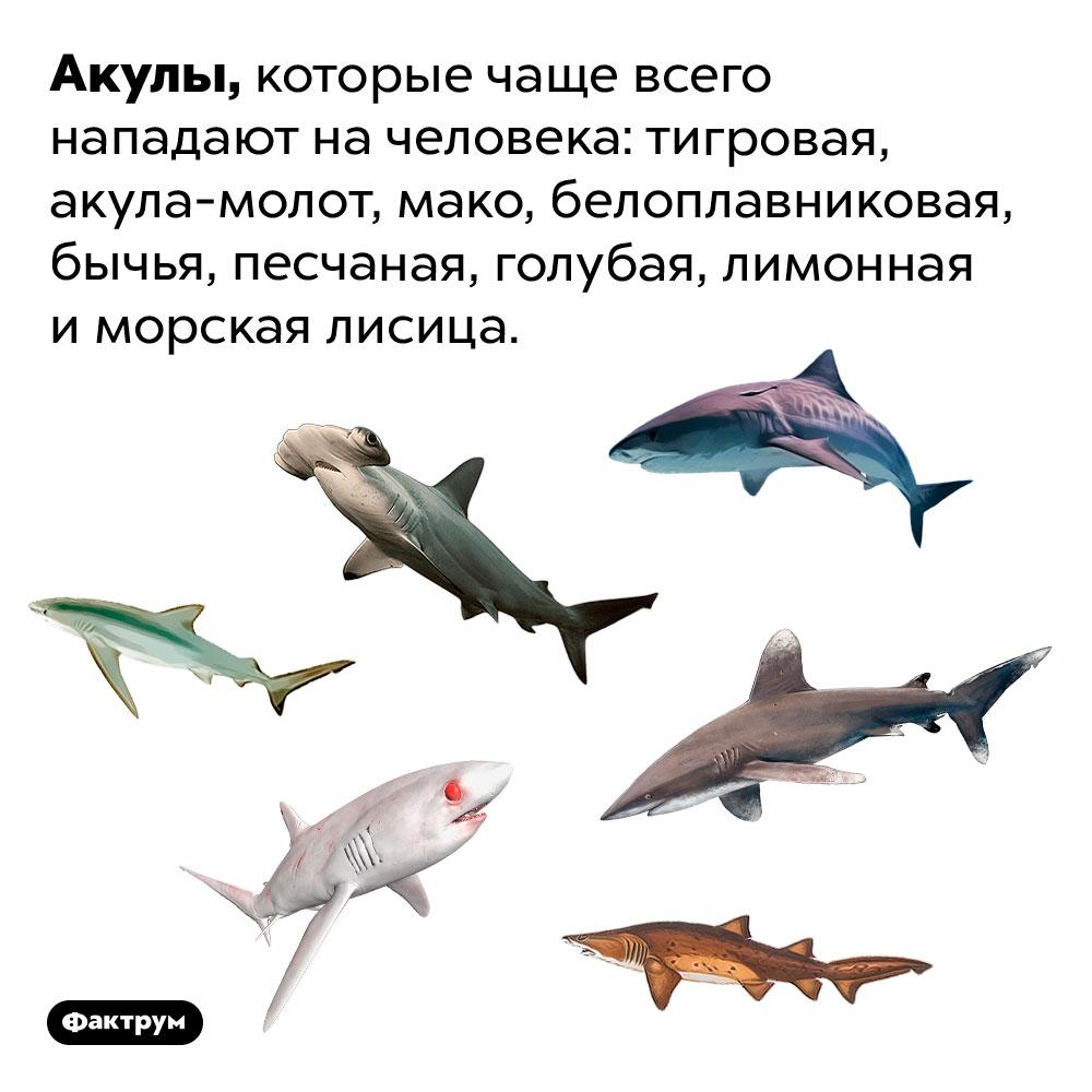 Акулы, которые чаще всего нападают начеловека. Тигровая, акула-молот, мако, белоплавниковая, бычья, песчаная, голубая, лимонная иморская лисица.