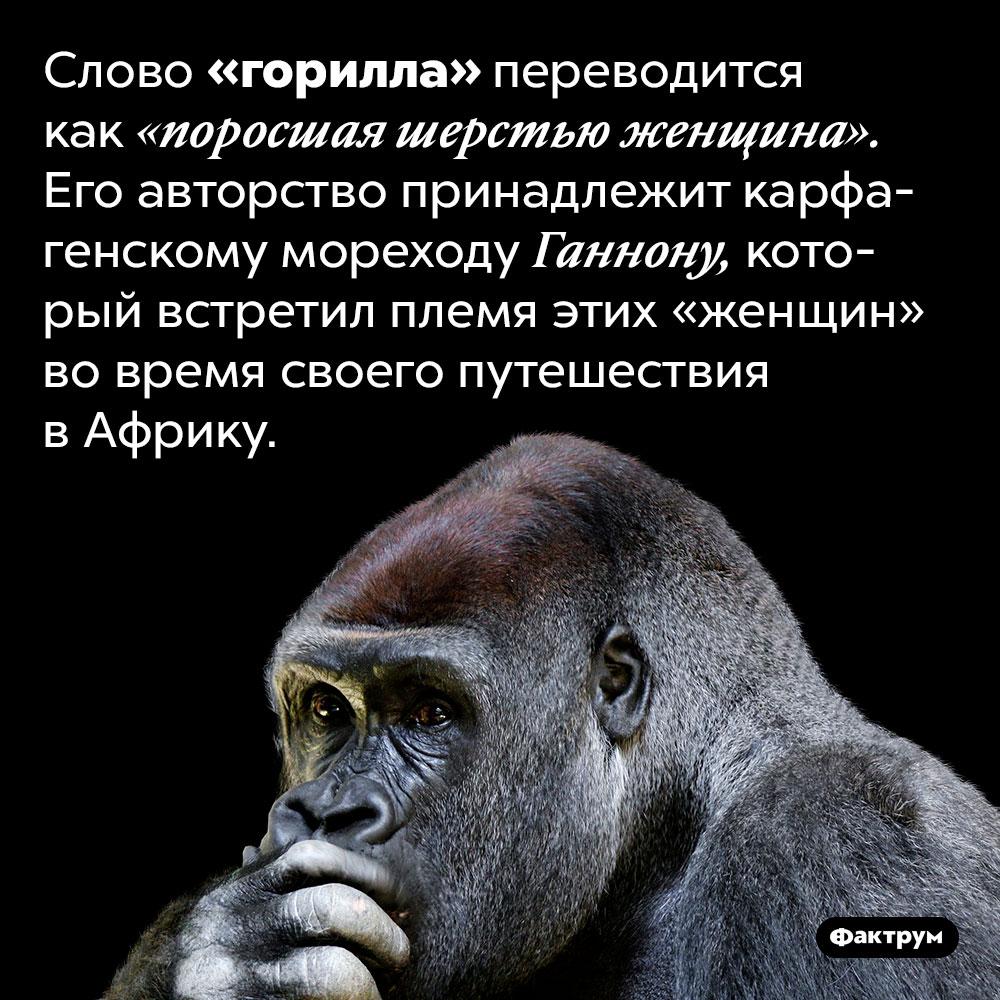 Буквальный перевод слова «горилла» — «поросшая шерстью женщина». Слово «горилла» переводится как «поросшая шерстью женщина». Его авторство принадлежит карфагенскому мореходу Ганнону, который встретил племя этих «женщин» во время своего путешествия в Африку.