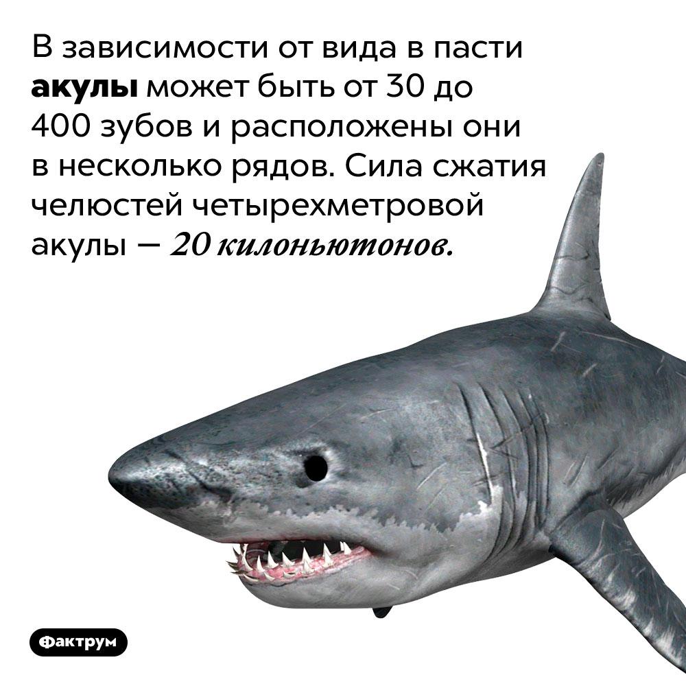 Взависимости отвида впасти акулы может быть от30до400зубов ирасположены они внесколько рядов. Сила сжатия челюстей четырехметровой акулы— 20 Килоньютонов.