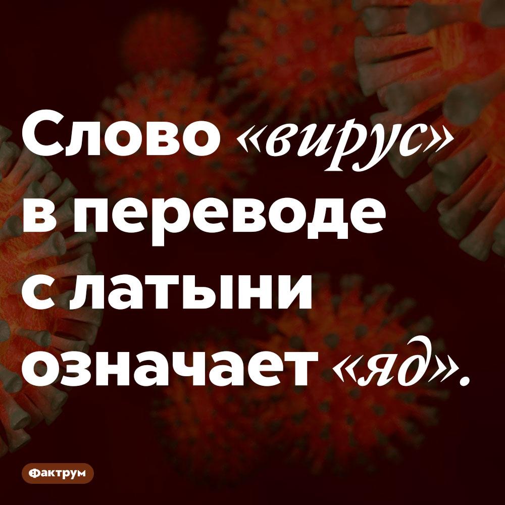 «Вирус» переводится как «яд». Слово «вирус» в переводе с латыни означает «яд».