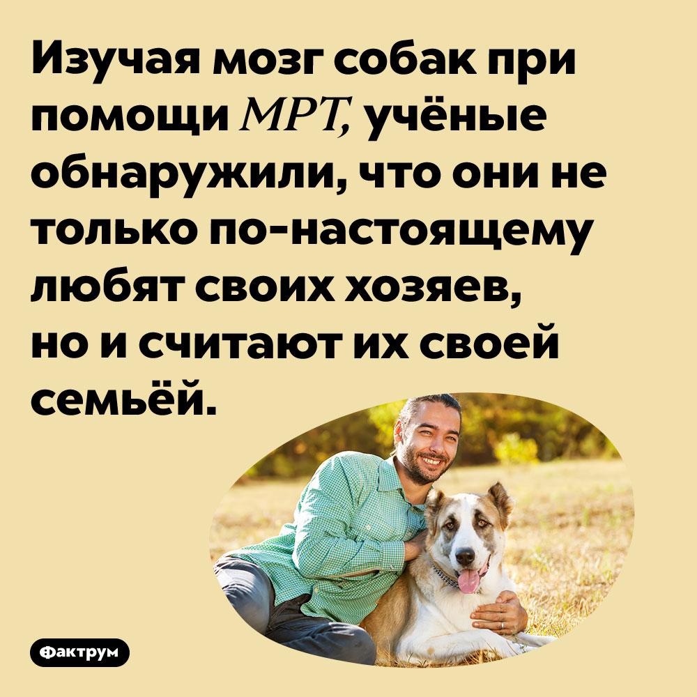 Собаки считают хозяев своей семьёй. Изучая мозг собак при помощи МРТ, учёные обнаружили, что они не только по-настоящему любят своих хозяев, но и считают их своей семьёй.