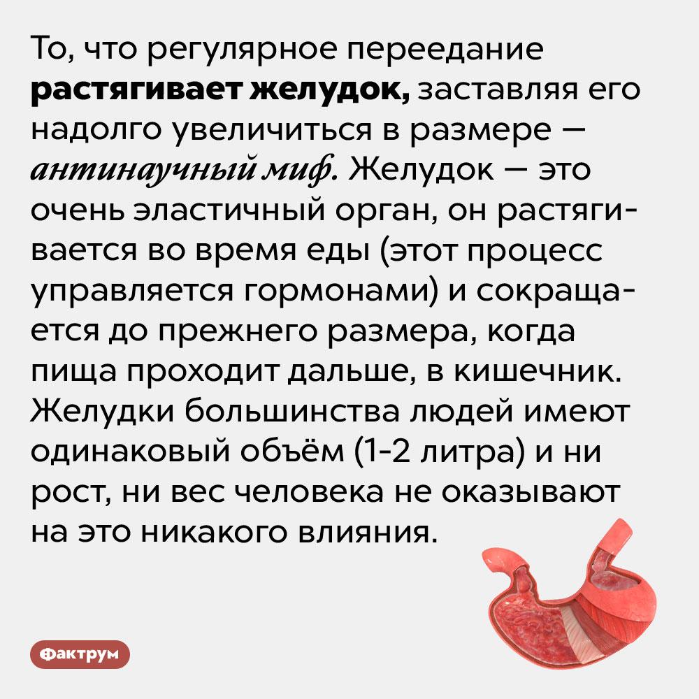 Желудок неможет навсегда растянуться отеды. То, что регулярное переедание растягивает желудок, заставляя его надолго увеличиться в размере — антинаучный миф. Желудок — это очень эластичный орган, он растягивается во время еды (этот процесс управляется гормонами) и сокращается до прежнего размера, когда пища проходит дальше, в кишечник. Желудки большинства людей имеют одинаковый объём (1-2 литра) и ни рост, ни вес человека не оказывают на это никакого влияния.