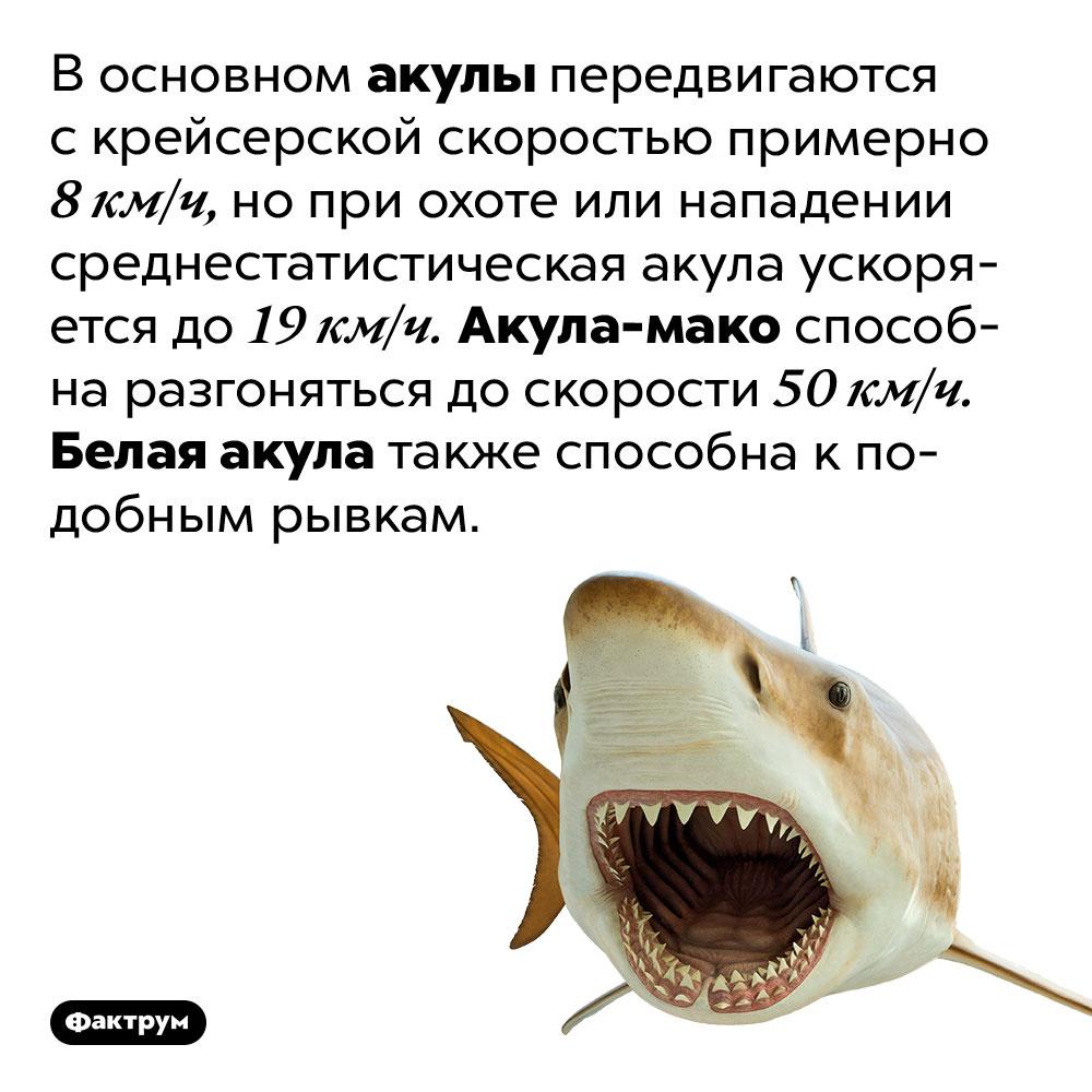 Восновном акулы передвигаются скрейсерской скоростью примерно 8км/ч. Нопри охоте или нападении среднестатистическая акула ускоряется до19км/ч. Акула-мако способна разгоняться доскорости 50км/ч. Белая акула также способна кподобным рывкам. Такие исключения возможны благодаря теплокровности этих видов.
