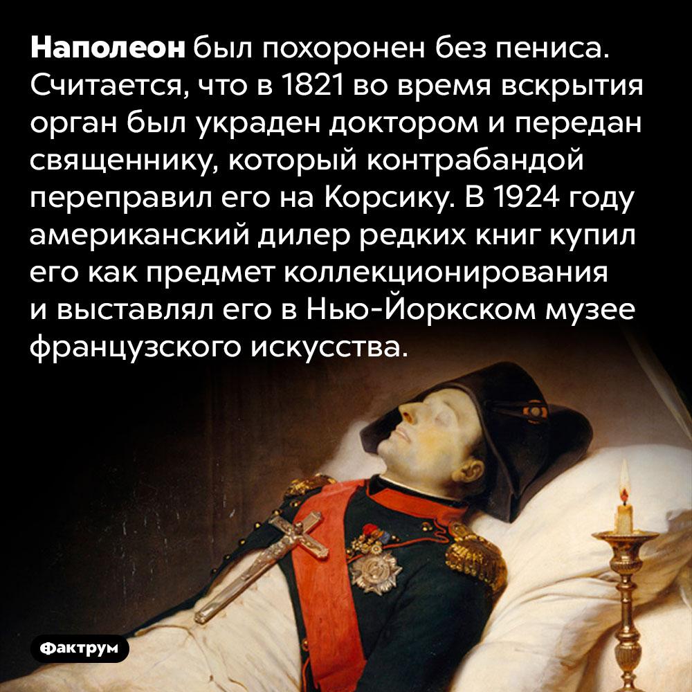 Наполеона похоронили без пениса. Наполеон был похоронен без пениса. Считается, что в 1821 во время вскрытия орган был украден доктором и передан священнику, который контрабандой переправил его на Корсику. В 1924 году американский дилер редких книг купил его как предмет коллекционирования и выставлял его в Нью-Йоркском музее французского искусства.
