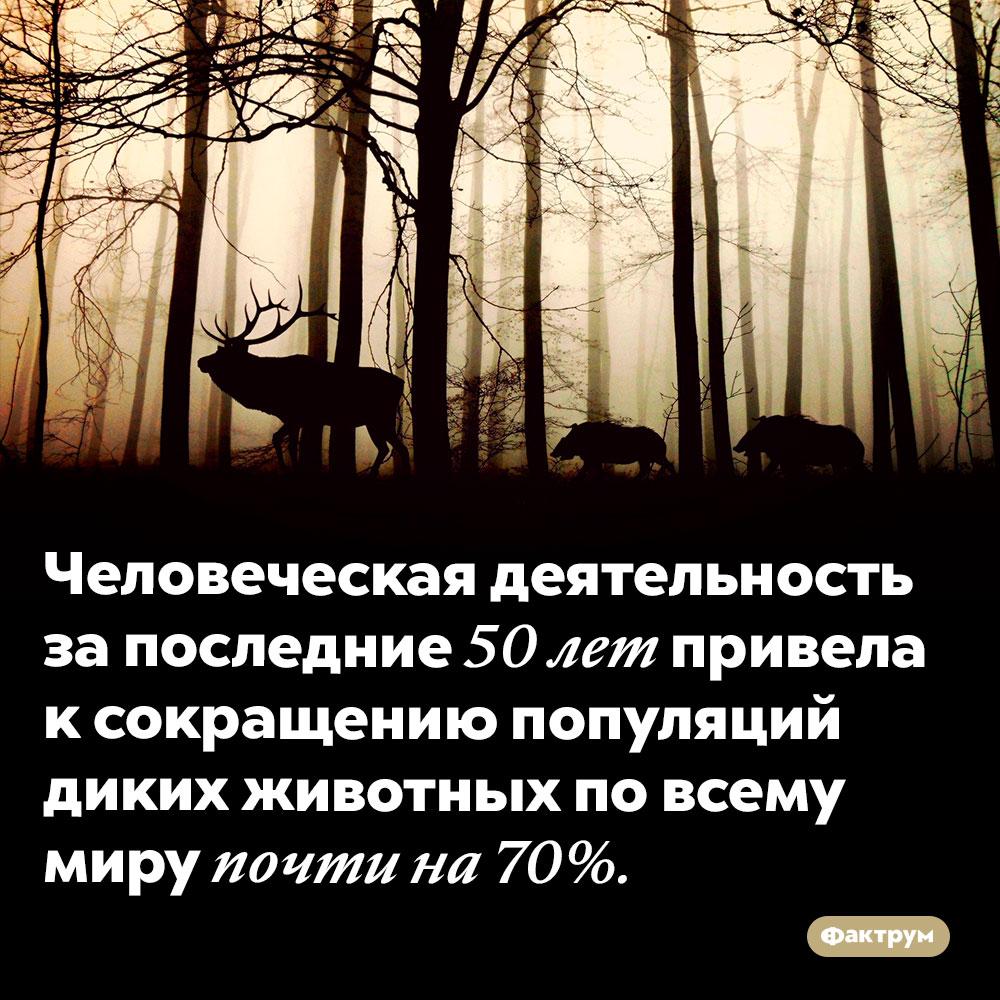 Всего заполвека наша деятельность сократила фауну на70%. Человеческая деятельность за последние 50 лет привела к сокращению популяций диких животных по всему миру почти на 70%.
