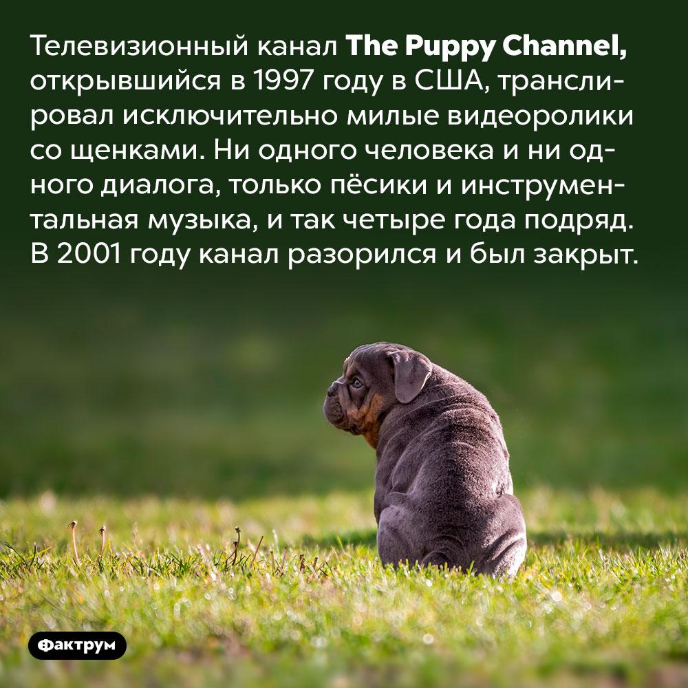 Телеканал про милых щенков проработал четыре года иразорился. Телевизионный канал The Puppy Channel, открывшийся в 1997 году в США, транслировал исключительно милые видеоролики со щенками. Ни одного человека и ни одного диалога, только пёсики и инструментальная музыка, и так четыре года подряд. В 2001 году канал разорился и был закрыт.
