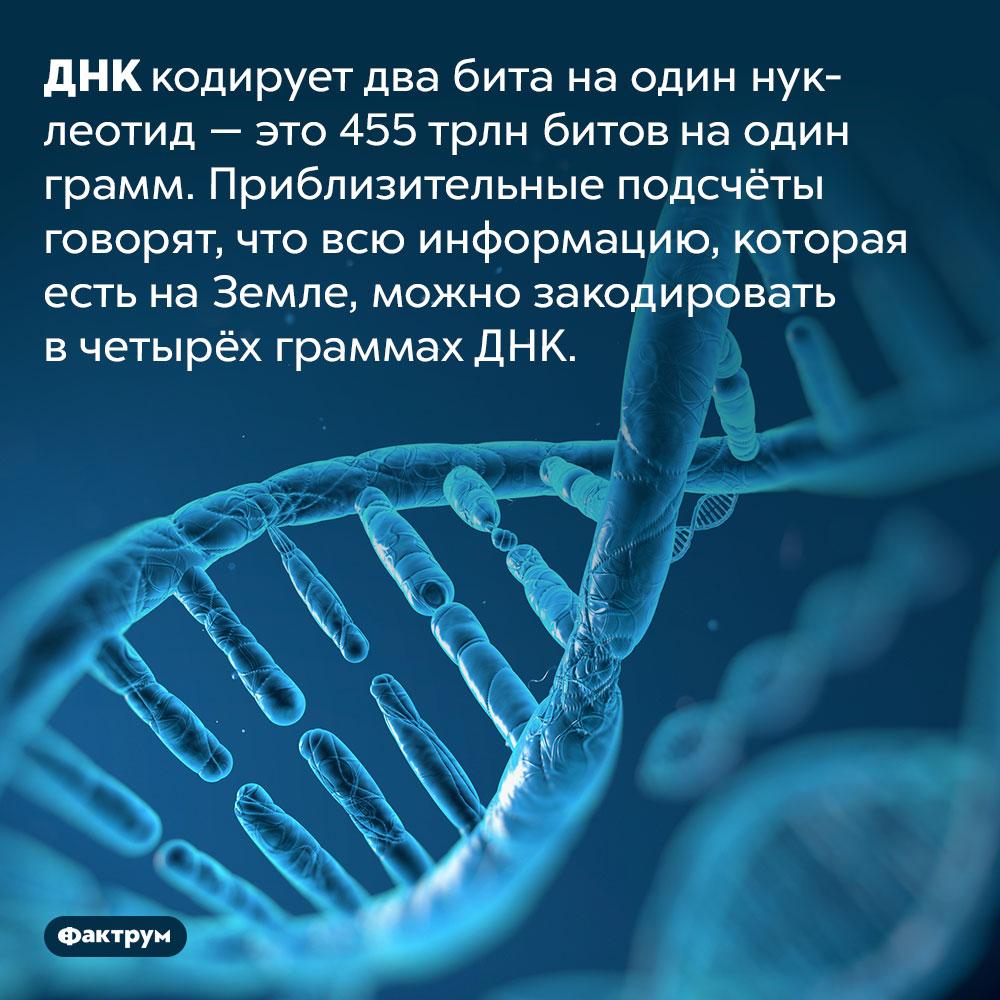 Вся информация, существующая наЗемле, поместится вчетыре грамма ДНК. ДНК кодирует два бита на один нуклеотид — это 455 трлн битов на один грамм. Приблизительные подсчёты говорят, что всю информацию, которая есть на Земле, можно закодировать в четырёх граммах ДНК.