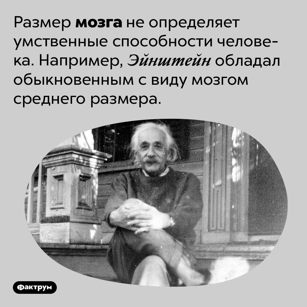 Размер мозга неопределяет умственные способности человека. Например, Эйнштейн обладал обыкновенным свиду мозгом среднего размера.
