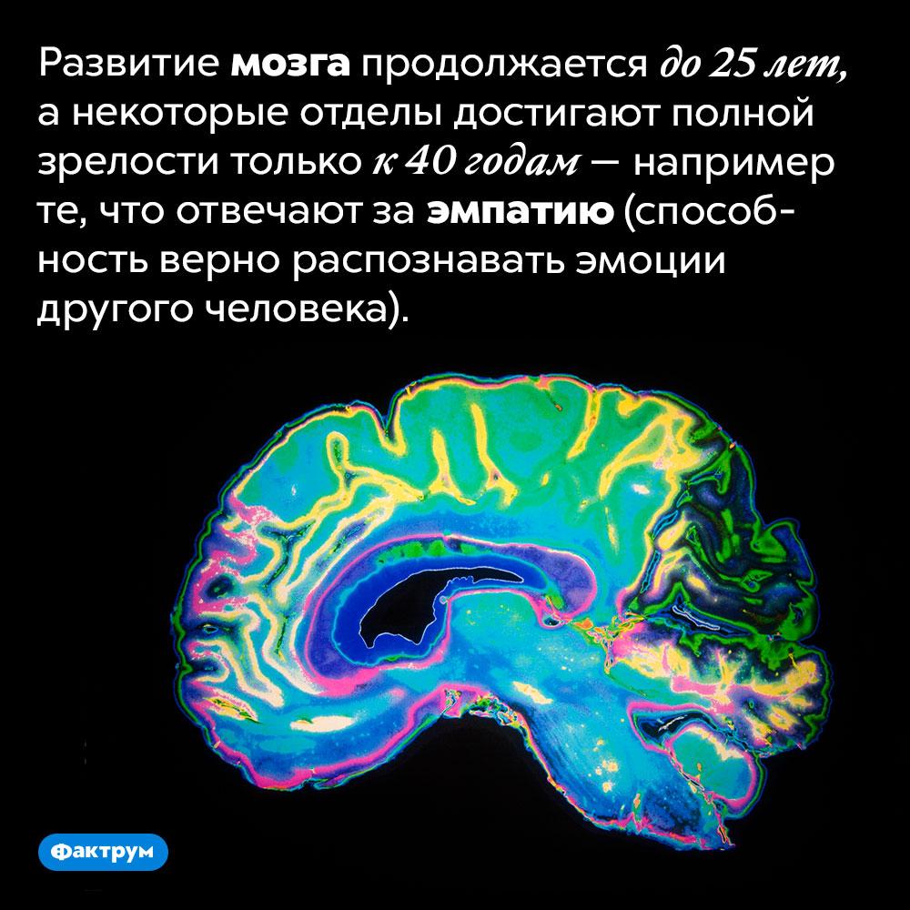 Развитие мозга продолжается до25лет. Анекоторые отделы достигают полной зрелости только к40 годам— например те, что отвечают заэмпатию (способность верно распознавать эмоциидругого человека).