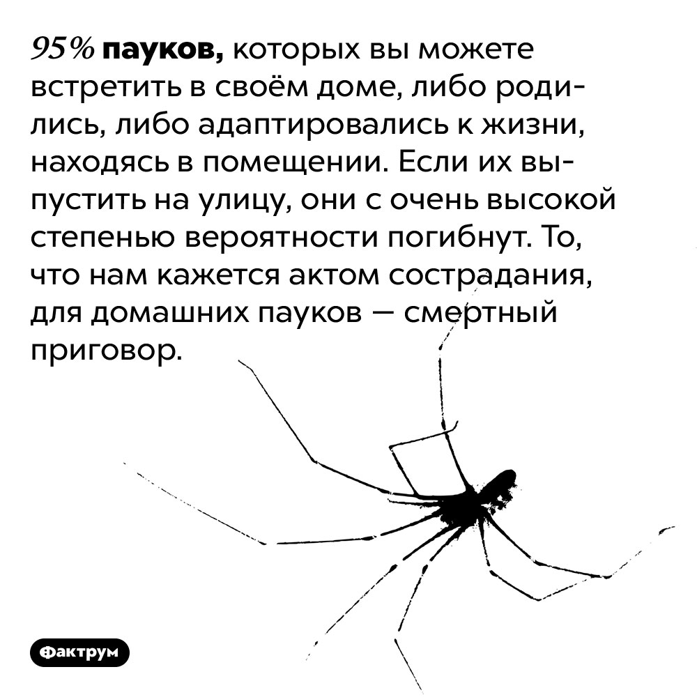 Домашние пауки неспособны жить вне дома. 95% пауков, которых вы можете встретить в своём доме, либо родились, либо адаптировались к жизни, находясь в помещении. Если их выпустить на улицу, они с очень высокой степенью вероятности погибнут. То, что нам кажется актом сострадания, для домашних пауков — смертный приговор.